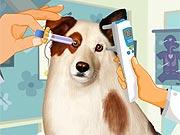 Cachorro no Oftamologista