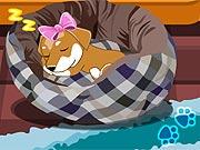 Cuidar da Cleo, a Cachorrinha