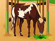 Tratamento de Cavalos